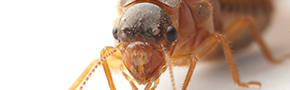 Insect Control | Budget Pest Control - Cleveland, OH,OH