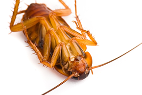 Contact Us | Budget Pest Control - Cleveland, OH