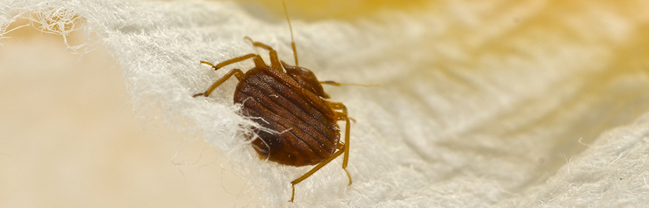 Bed Bug Control Cleveland| Budget Pest Control - Cleveland, OH